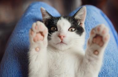 Evcil Hayvanlarımız İle Daha Hijyenik Yaşam İçin Temizlik Önerileri